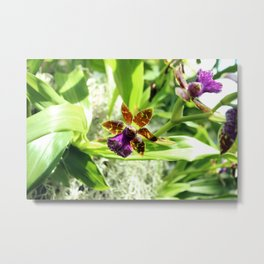 Orchids - Purple, Yellow, and Brown Metal Print