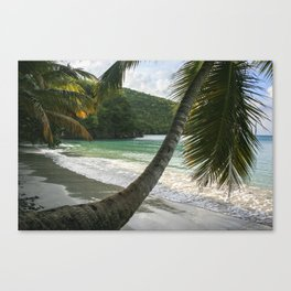 Maho Palms Canvas Print