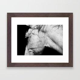 Casper   Animals   Horse Photography   black-white   nature Framed Art Print