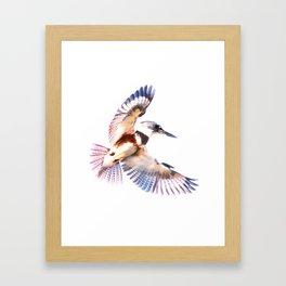 Colorful Kingfisher Framed Art Print