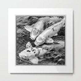 Taiwan, Three Carp Swimming in a Pond Metal Print