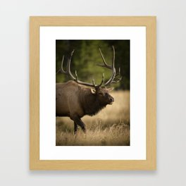 Bull Elk Along The Madison River Framed Art Print