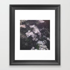 Hawthorn Blossoms Framed Art Print