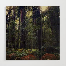 Sunrays in the Redwoods Wood Wall Art