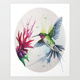 SPLASH Hummingbird Art Print
