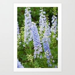 Delphinium Flowers 3 Art Print