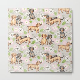 Dachshunds and dogwood blossoms Metal Print