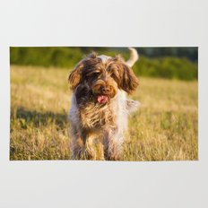 Brown Roan Italian Spinone Dog in Action Rug