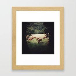 Camino Cows Framed Art Print