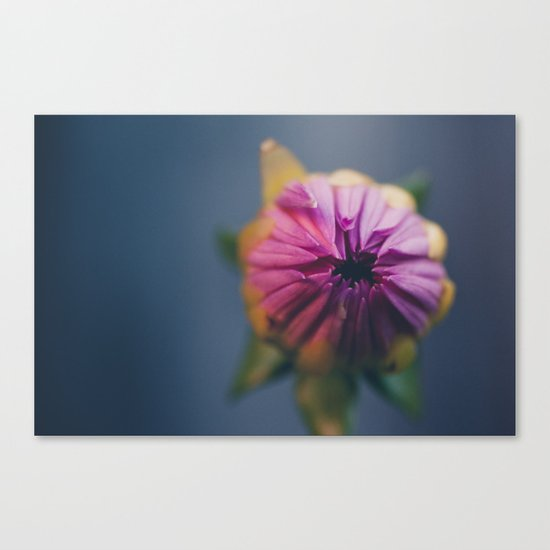 Ready to Bloom, in color Canvas Print