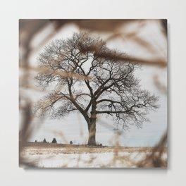 Framed by Reeds Metal Print