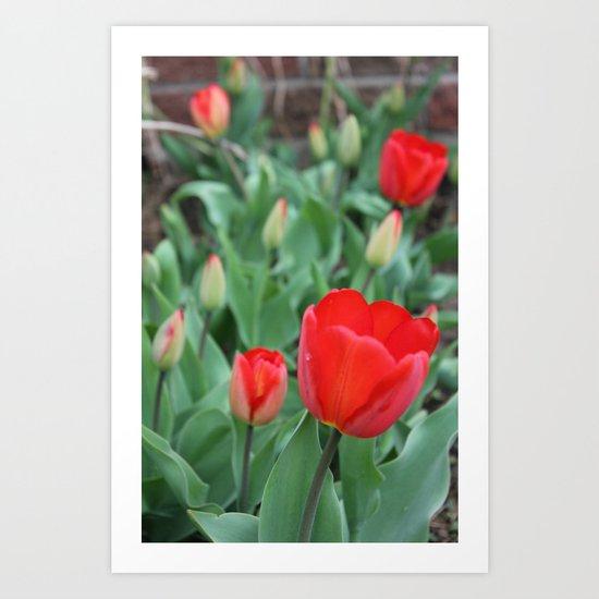 Tulip Darlings Art Print