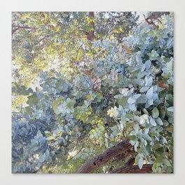 eucalyptus dreaming Canvas Print