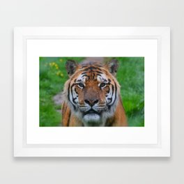 tiger eyes Framed Art Print