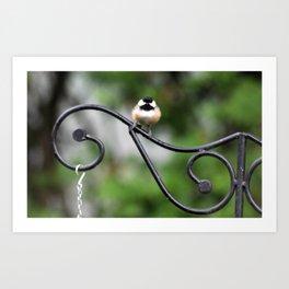 Fluffy Chickadee Art Print