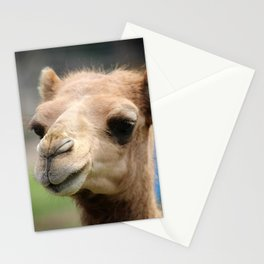 Baby Arabian Camel Stationery Cards