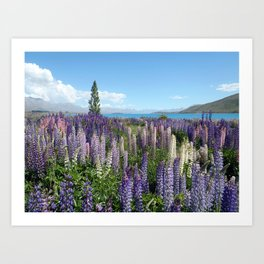Colorful lupine towers Art Print