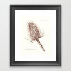 Wild Teasel botanical poster Framed Art Print