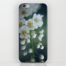 macro iPhone & iPod Skin