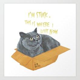 Boxcat Art Print