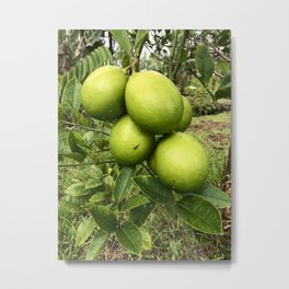 Hilo Lemons Metal Print