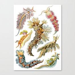 Ernst Haeckel - Nudibranchia (Snails) Canvas Print
