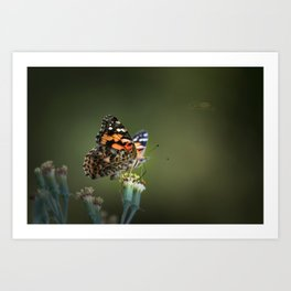 An American Lady Buttefly Art Print