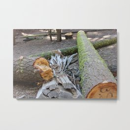 logs with moss on them in the forest Metal Print