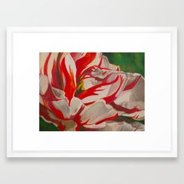 Red and White Striped Tulip Framed Art Print