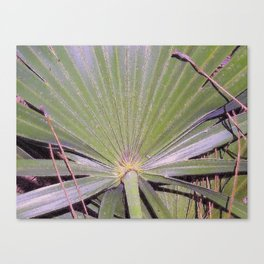 Saw Palmetto Abstract Canvas Print