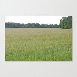 Peaceful Wheat Canvas Print