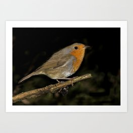 Little cute red robin bird Art Print