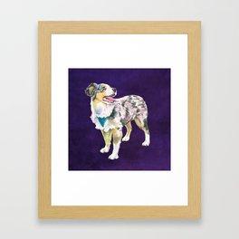 Toy Australian Shepherd Framed Art Print