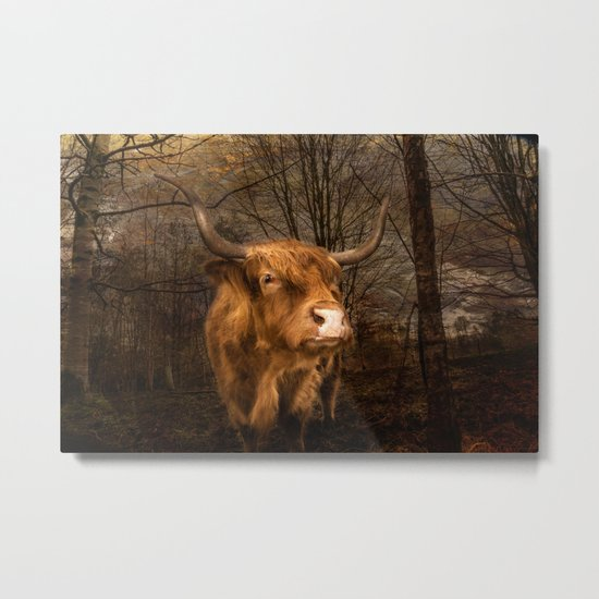 Highland Toffee Coo Metal Print