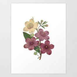 Rose Myrtle Art Print