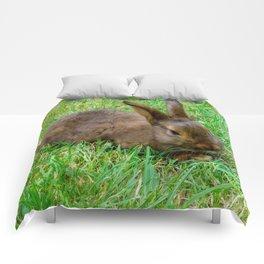 Bunny Baby Comforters