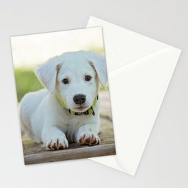 Poppy | Chiot Stationery Cards