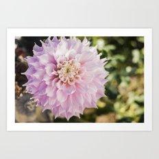 Pink Dahlia Art Print