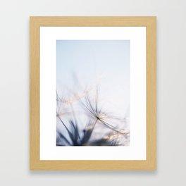 Macro dandelion Framed Art Print