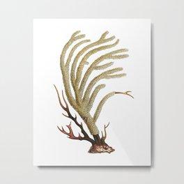 Sea Coral No.2 Antique Natural History Print Metal Print