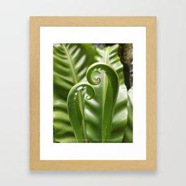 """Asplenium nidus, """"Bird's Nest Fern"""" Framed Art Print"""