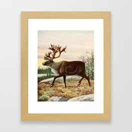 Fuertes, Louis Agassiz (1874-1927) - Burgess Animal Book for Children 1920 (Caribou) Framed Art Print