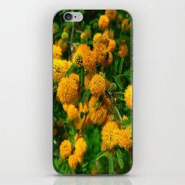 Huisache in Bloom iPhone Skin