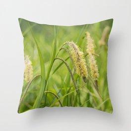 Grass. Pendulous Sedge (Carex pendula) growing wild in damp woodland.  Throw Pillow