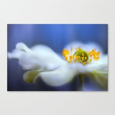 Anemone blues Canvas Print