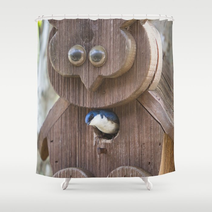 Tree Swallow In Bird House Shower Curtain By Amjackphoto