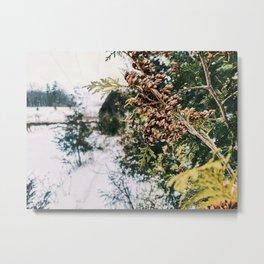 Winter forestry Metal Print