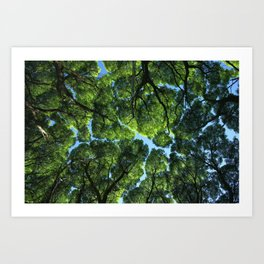 Crack willow ( salix fragilis ) crone. Art Print