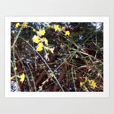 First Spring Flower Art Print