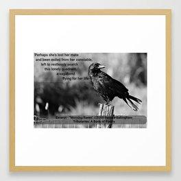 Morning Raven   Pamala Ballingham Framed Art Print